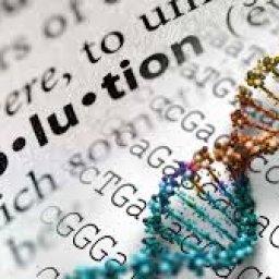 @evolution